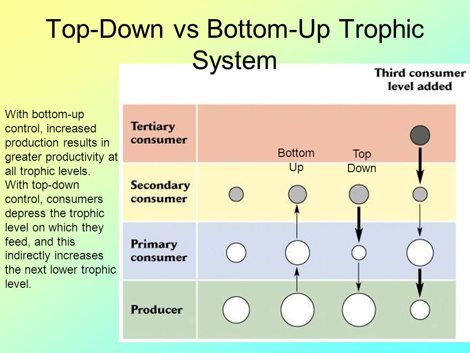 Top-Down vs Bottom-Up Trophic System