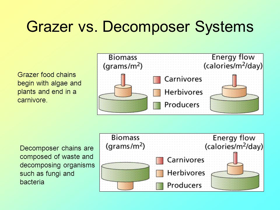 Grazer vs. Decomposer Systems