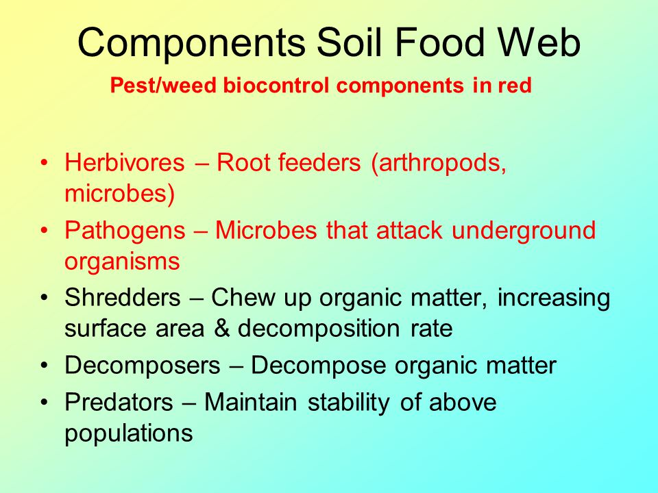 Components Soil Food Web