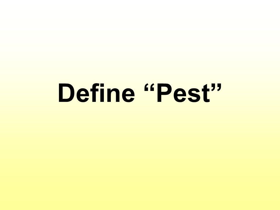 Define Pest