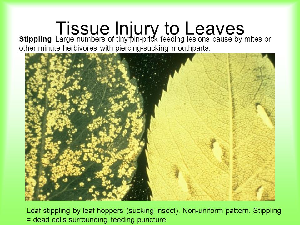 Tissue Injury to Leaves