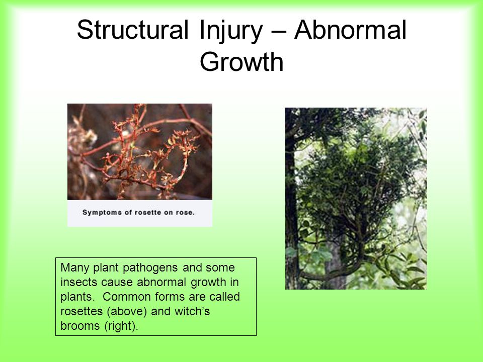 Structural Injury – Abnormal Growth