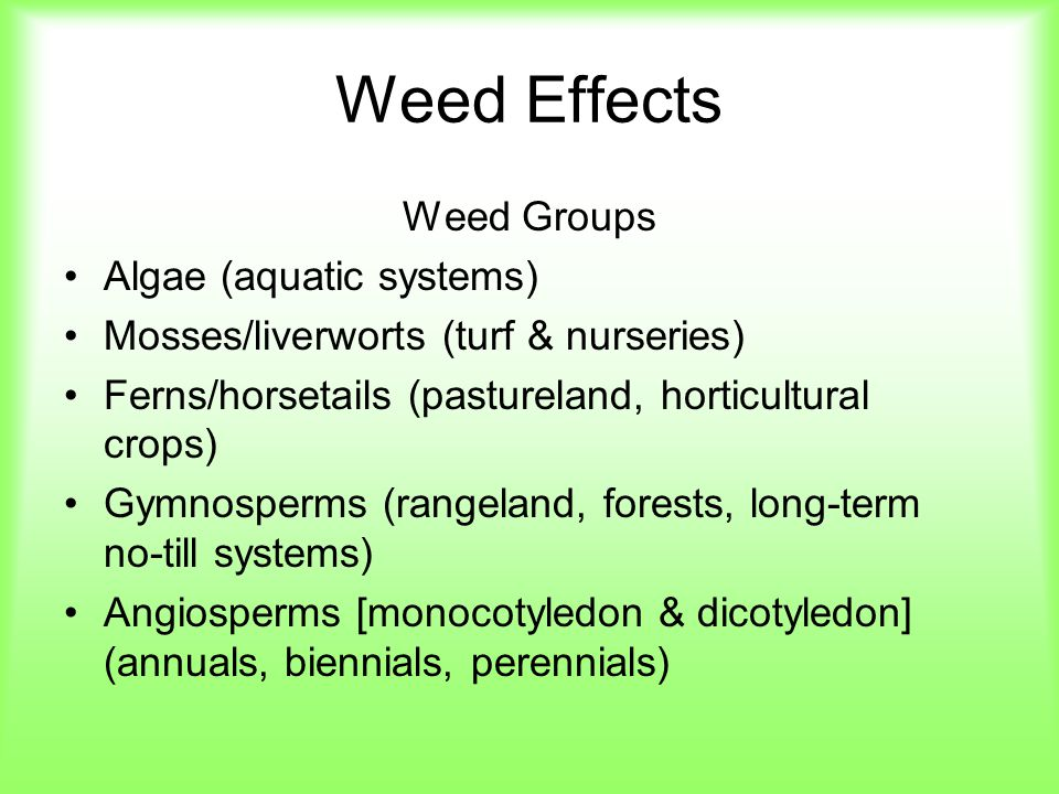 Weed Effects Weed Groups Algae (aquatic systems)