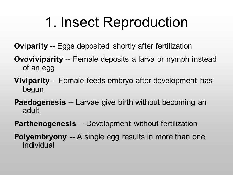 1. Insect Reproduction Oviparity -- Eggs deposited shortly after fertilization. Ovoviviparity -- Female deposits a larva or nymph instead of an egg.