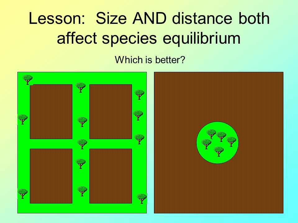 Lesson: Size AND distance both affect species equilibrium