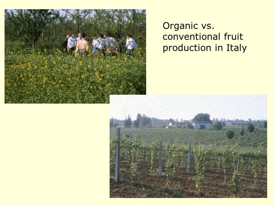Organic vs. conventional fruit production in Italy