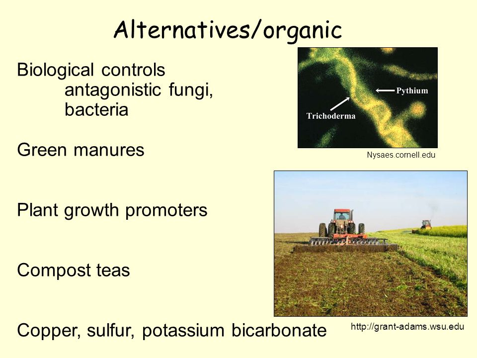 Alternatives/organic