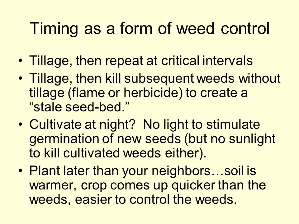 Timing as a form of weed control