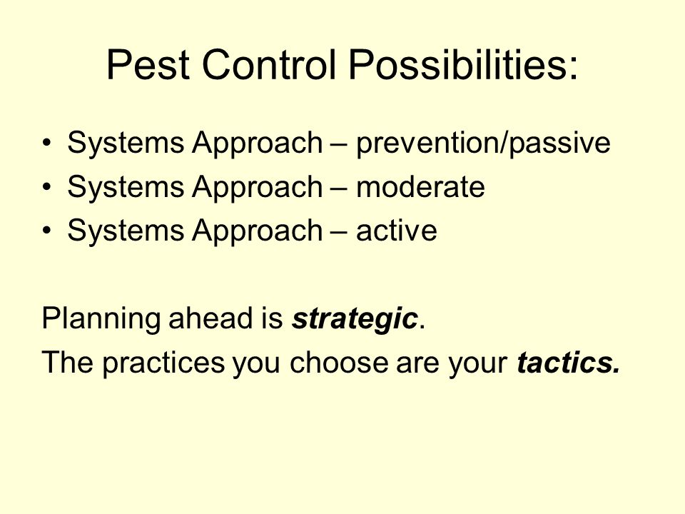 Pest Control Possibilities:
