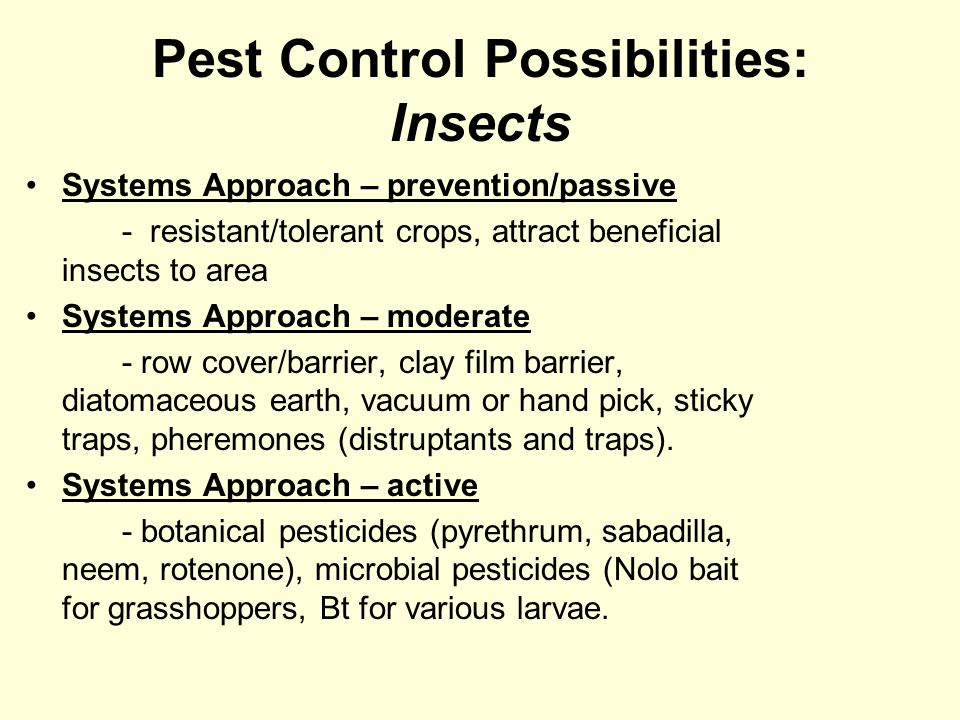 Pest Control Possibilities: Insects