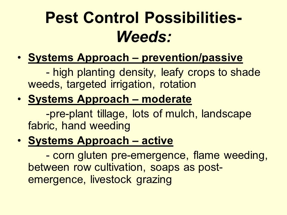 Pest Control Possibilities- Weeds: