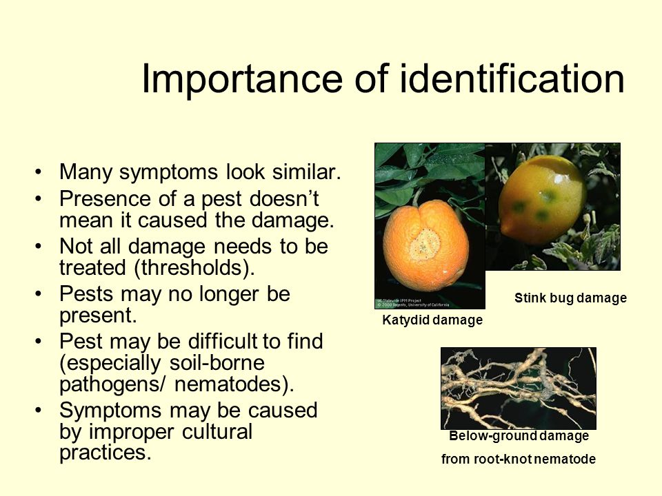 Importance of identification