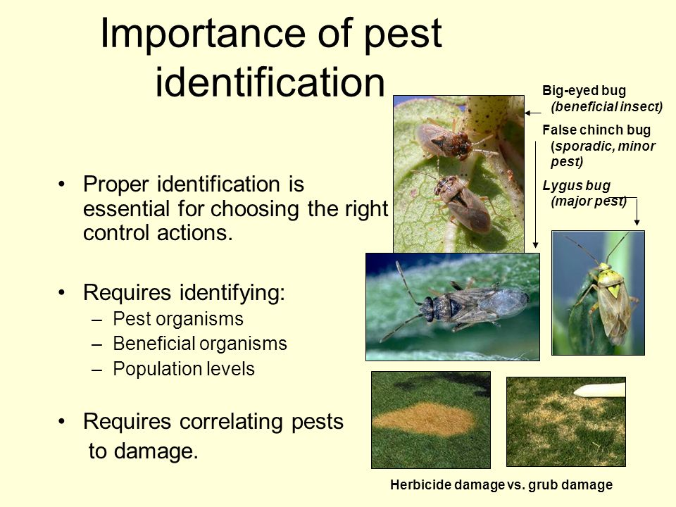 Importance of pest identification