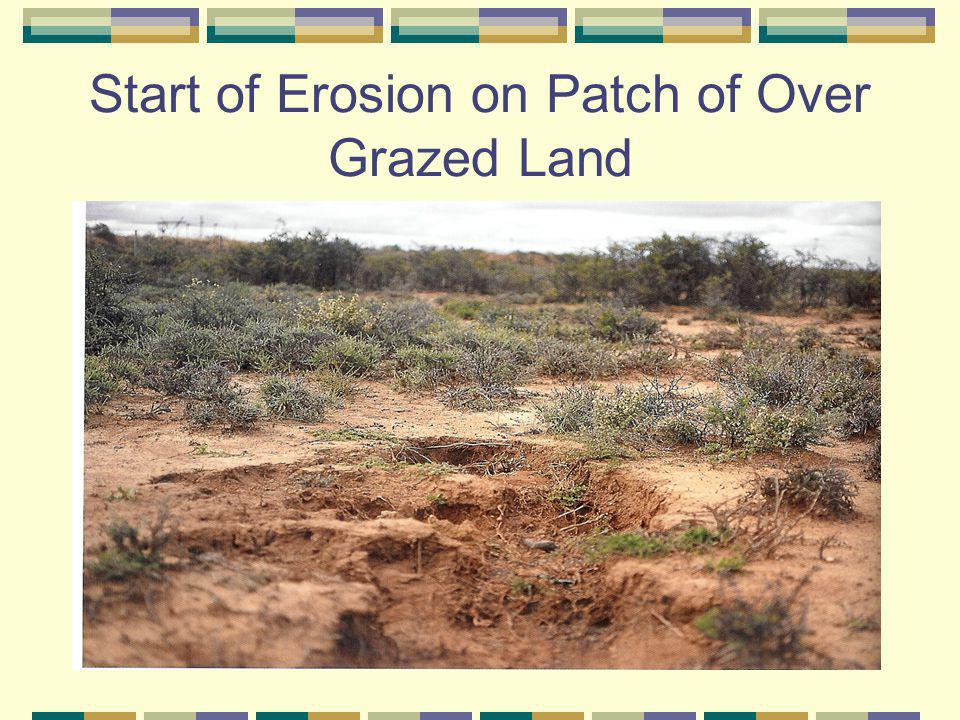 Start of Erosion on Patch of Over Grazed Land