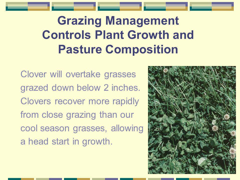Grazing Management Controls Plant Growth and Pasture Composition