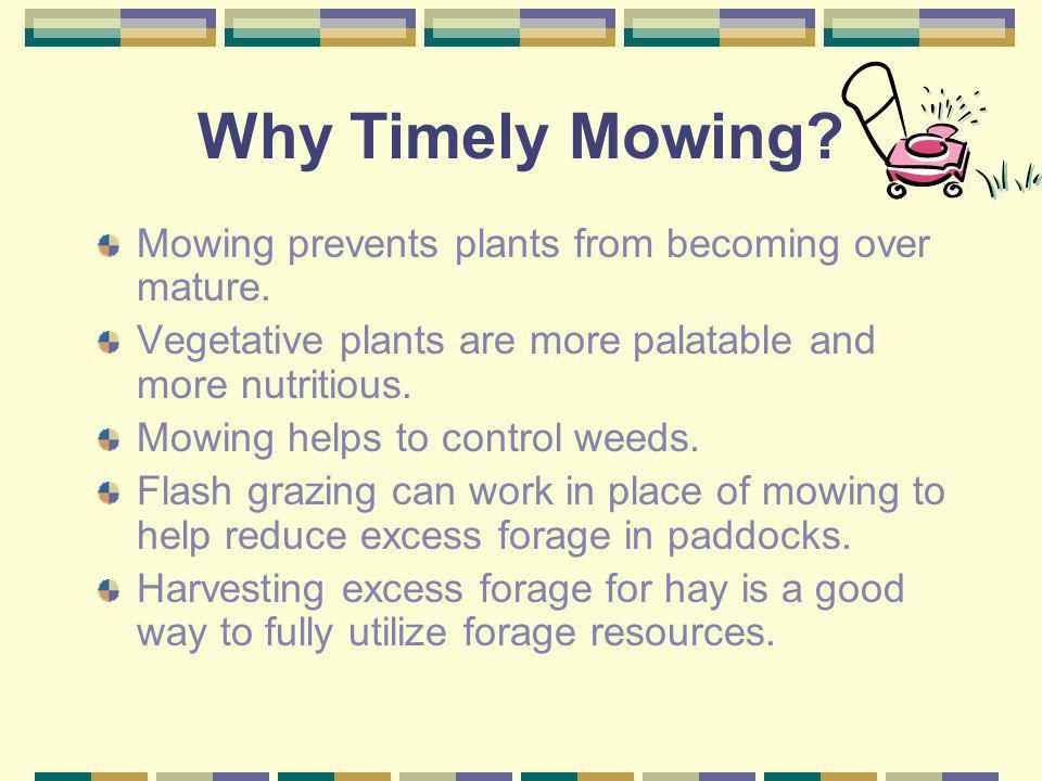 Why Timely Mowing Mowing prevents plants from becoming over mature.