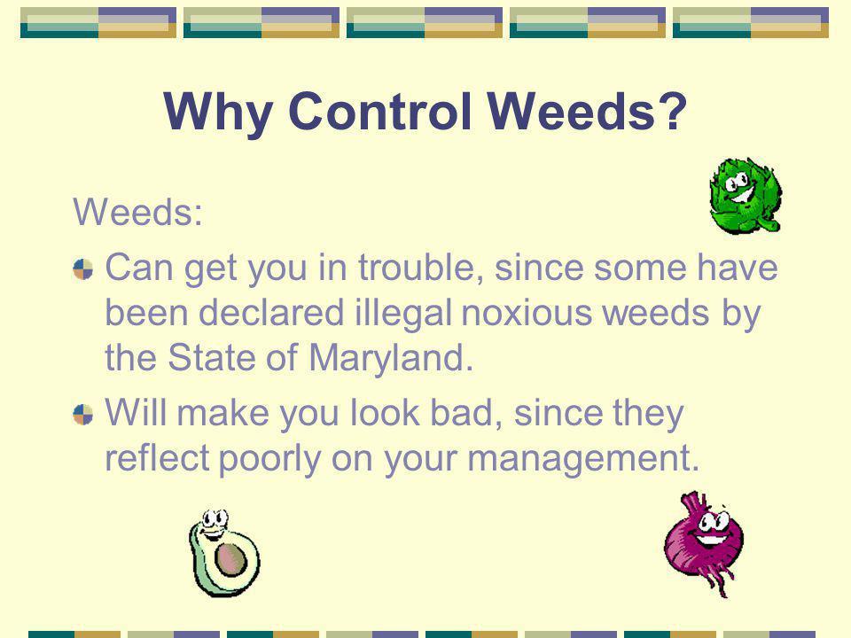 Why Control Weeds Weeds: