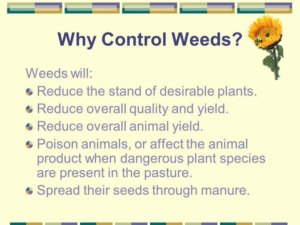 Why Control Weeds Weeds will: Reduce the stand of desirable plants.