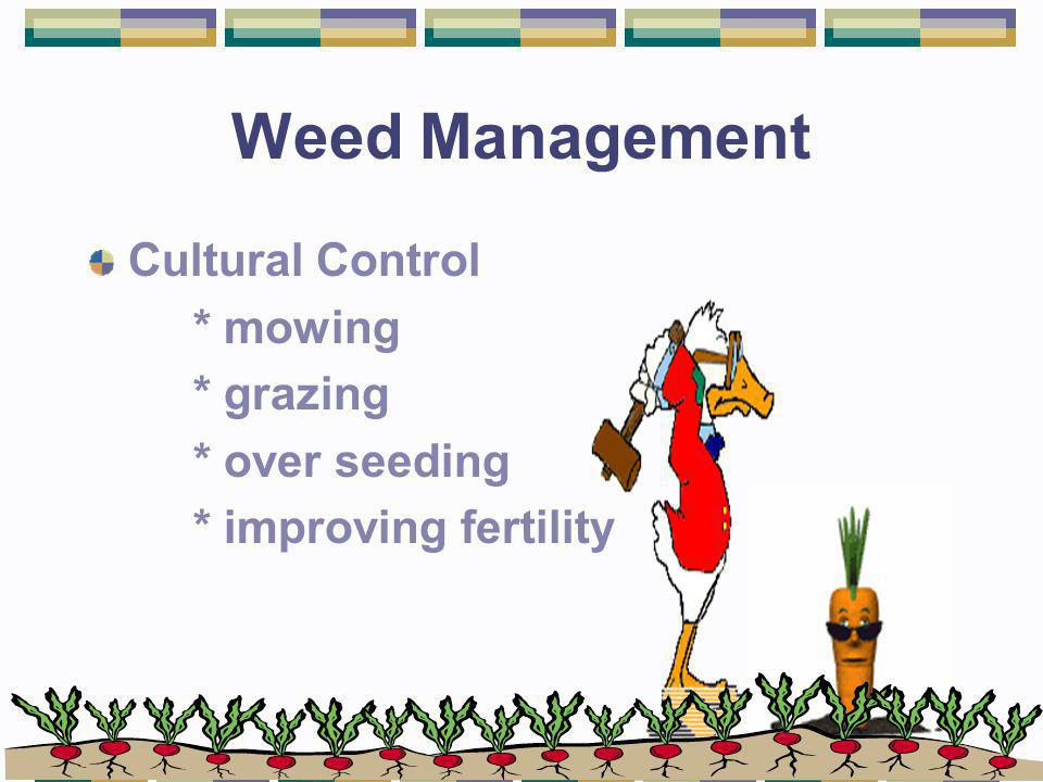 Weed Management Cultural Control * mowing * grazing * over seeding