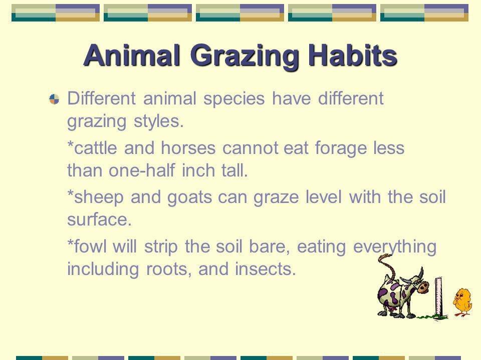 Animal Grazing Habits Different animal species have different grazing styles. *cattle and horses cannot eat forage less than one-half inch tall.
