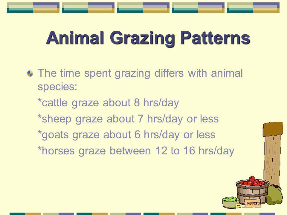 Animal Grazing Patterns