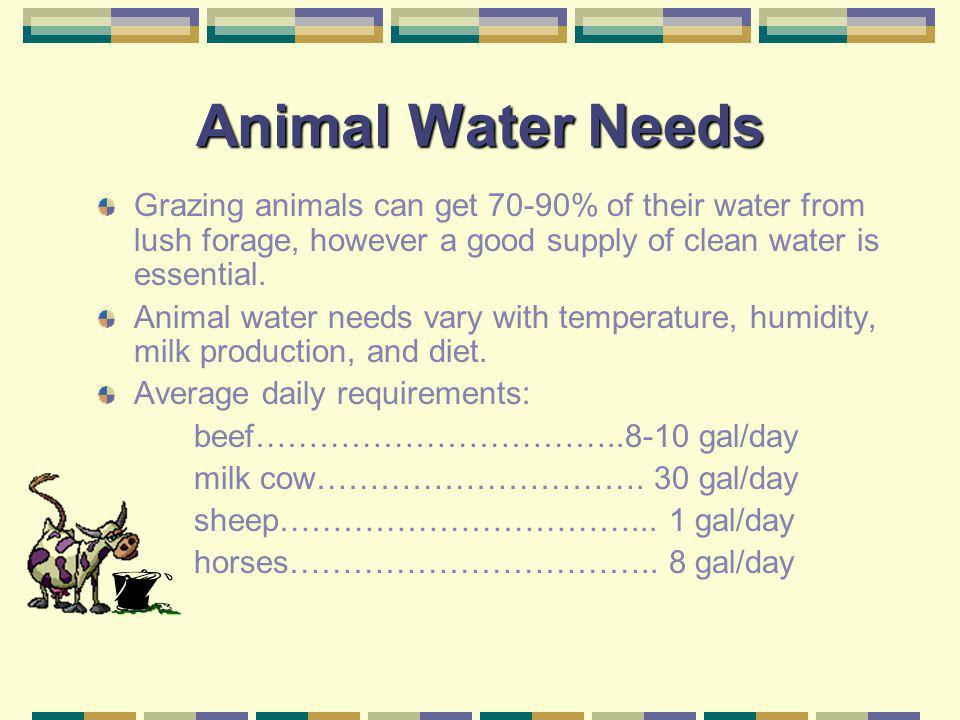 Animal Water Needs Grazing animals can get 70-90% of their water from lush forage, however a good supply of clean water is essential.