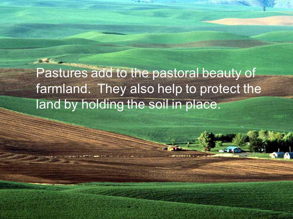 Pastures add to the pastoral beauty of farmland