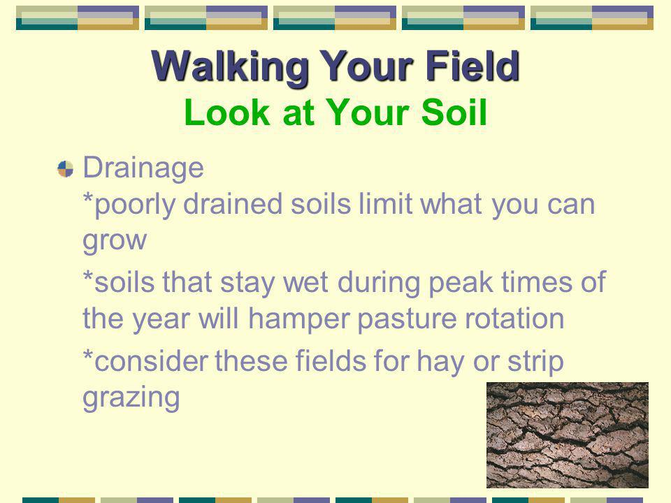 Walking Your Field Look at Your Soil