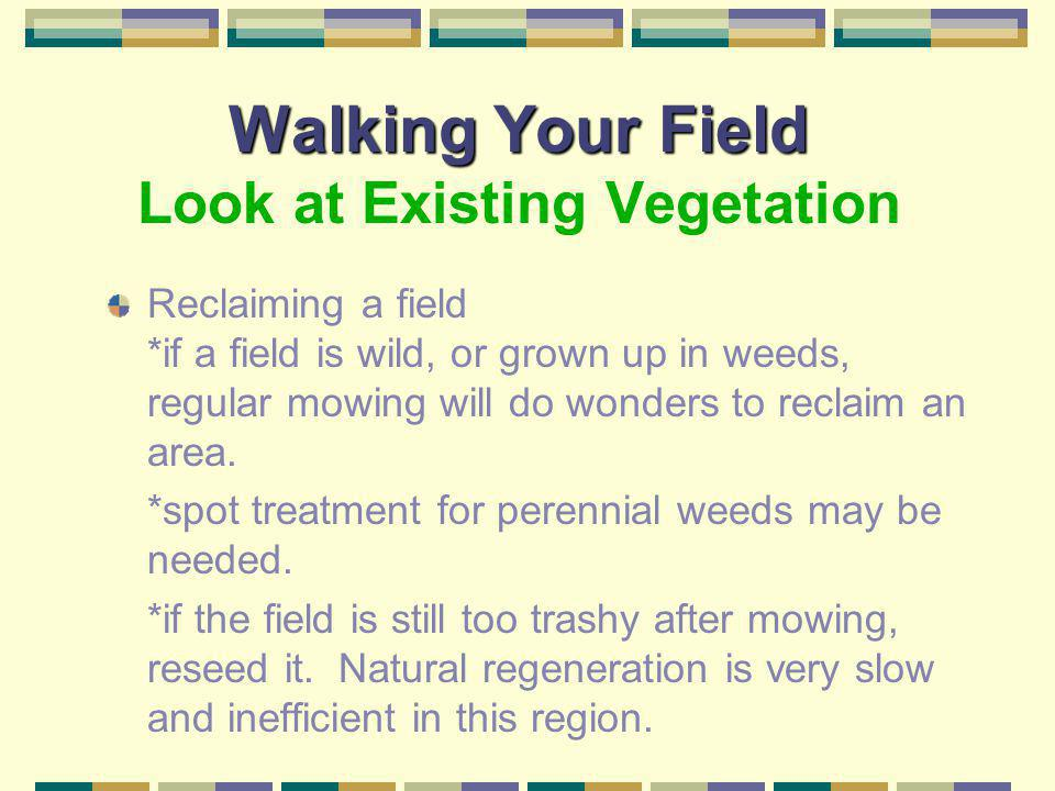 Walking Your Field Look at Existing Vegetation