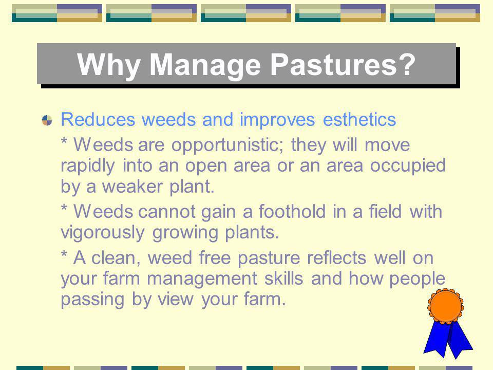 Why Manage Pastures Reduces weeds and improves esthetics
