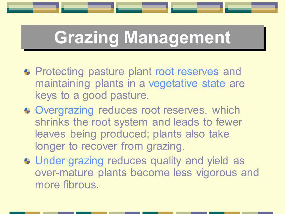 Grazing Management Protecting pasture plant root reserves and maintaining plants in a vegetative state are keys to a good pasture.