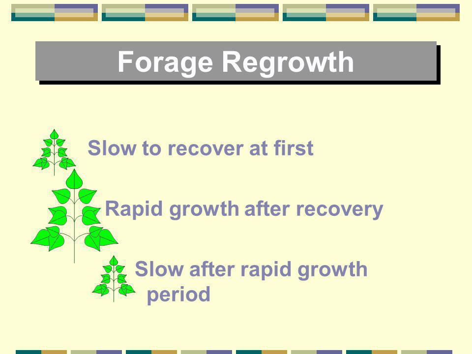 Forage Regrowth Slow to recover at first Rapid growth after recovery