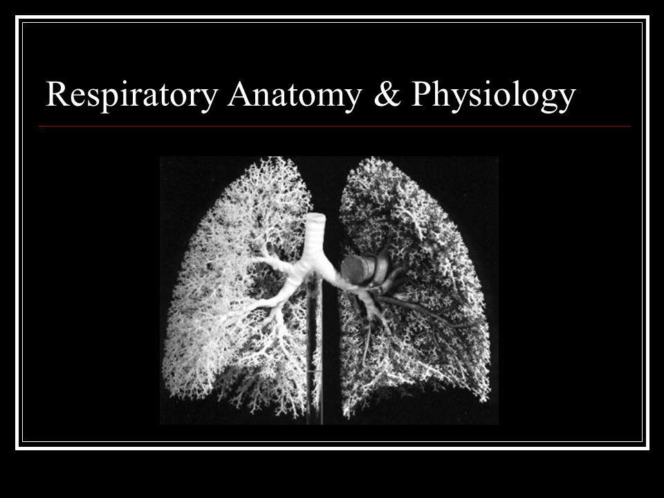 Respiratory Anatomy & Physiology