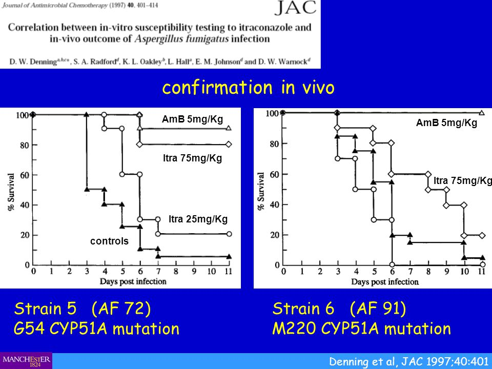 confirmation in vivo Strain 5 (AF 72) G54 CYP51A mutation