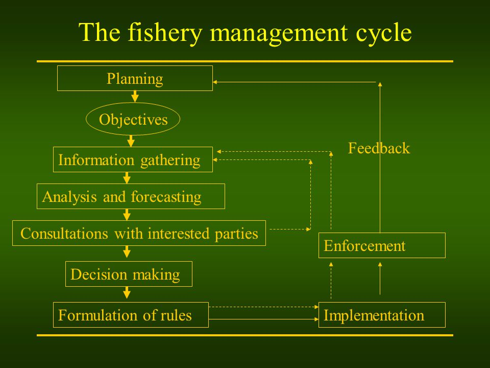 The fishery management cycle