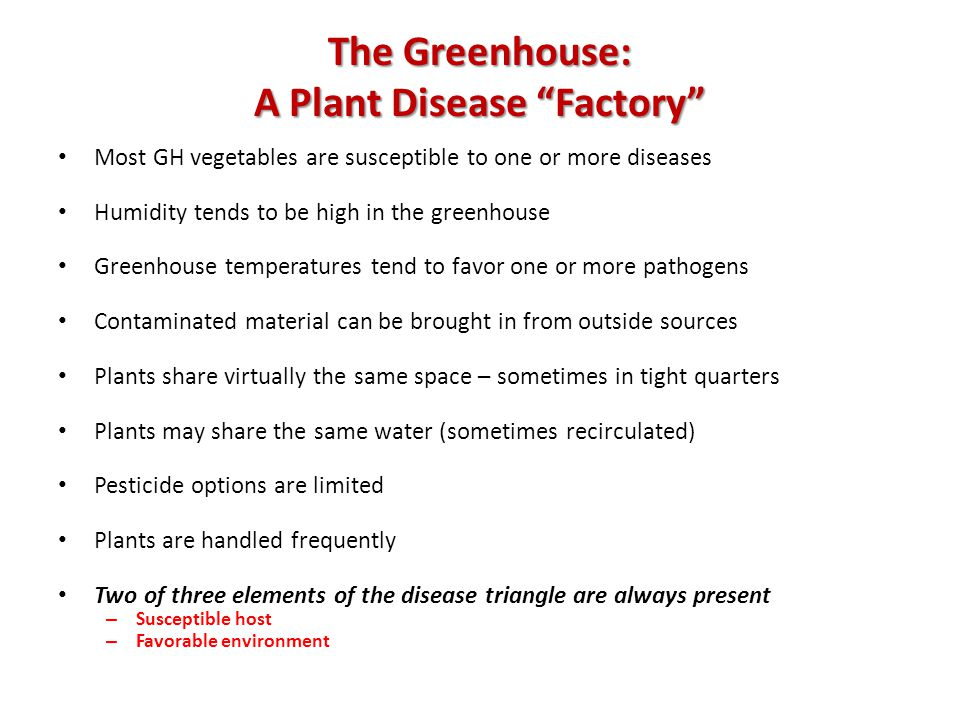 The Greenhouse: A Plant Disease Factory