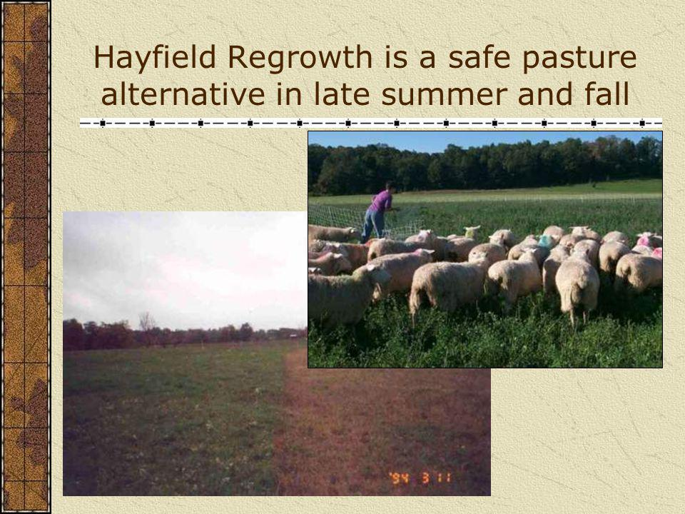 Hayfield Regrowth is a safe pasture alternative in late summer and fall