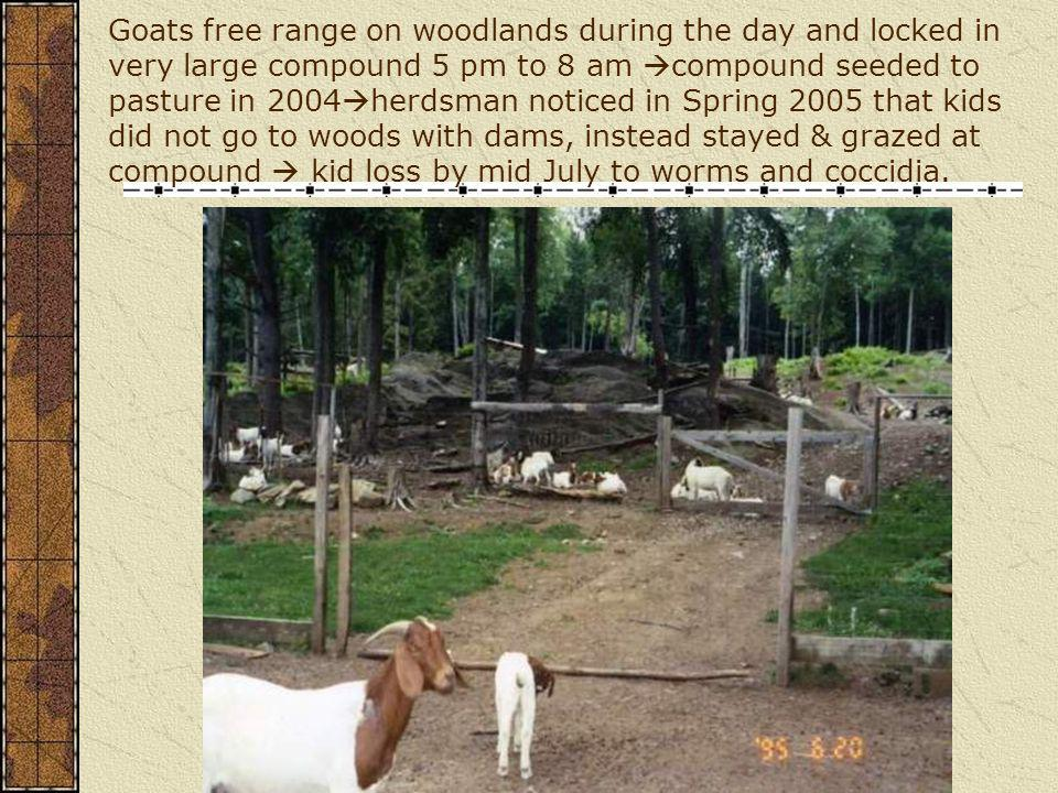 Goats free range on woodlands during the day and locked in very large compound 5 pm to 8 am compound seeded to pasture in 2004herdsman noticed in Spring 2005 that kids did not go to woods with dams, instead stayed & grazed at compound  kid loss by mid July to worms and coccidia.