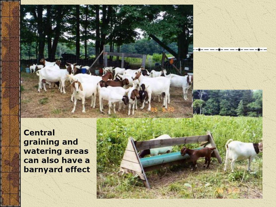 Central graining and watering areas can also have a barnyard effect