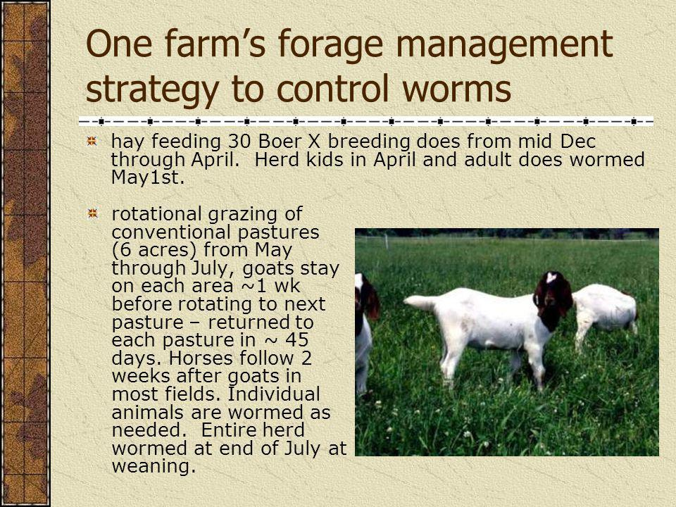 One farm's forage management strategy to control worms