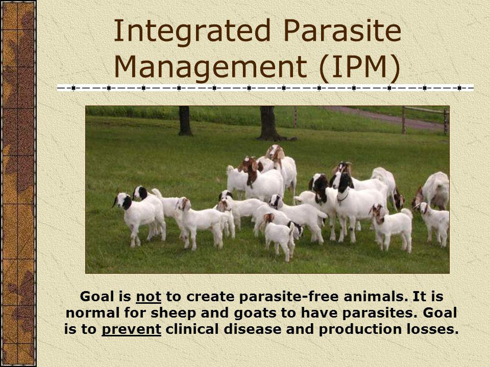 Integrated Parasite Management (IPM)