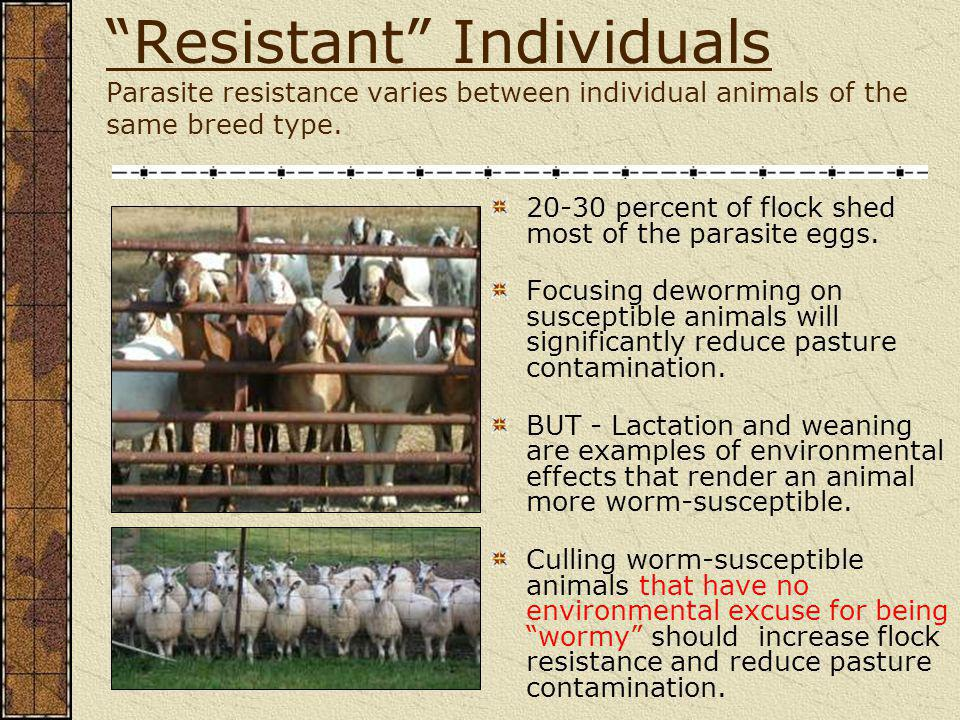 Resistant Individuals Parasite resistance varies between individual animals of the same breed type.
