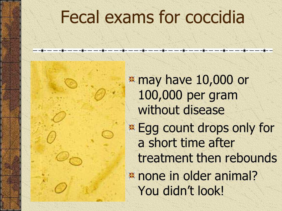 Fecal exams for coccidia