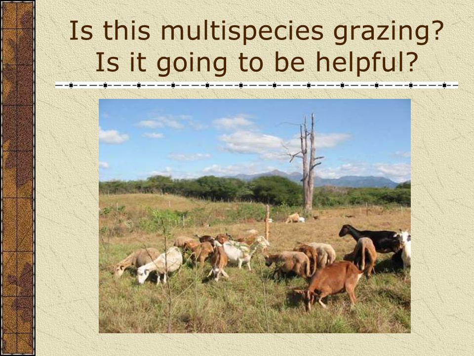 Is this multispecies grazing Is it going to be helpful