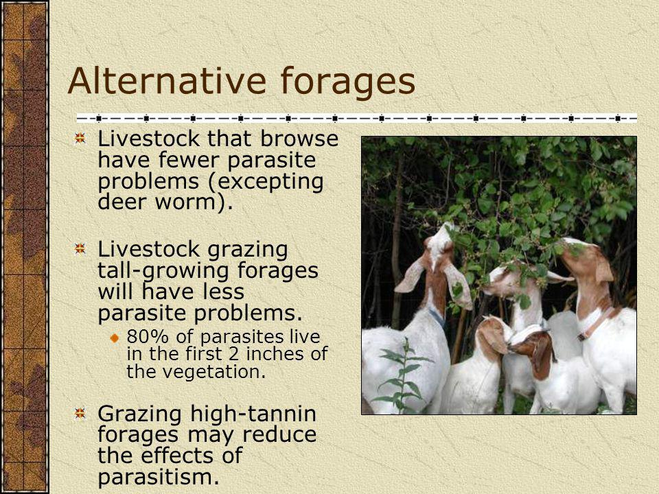 Alternative forages Livestock that browse have fewer parasite problems (excepting deer worm).