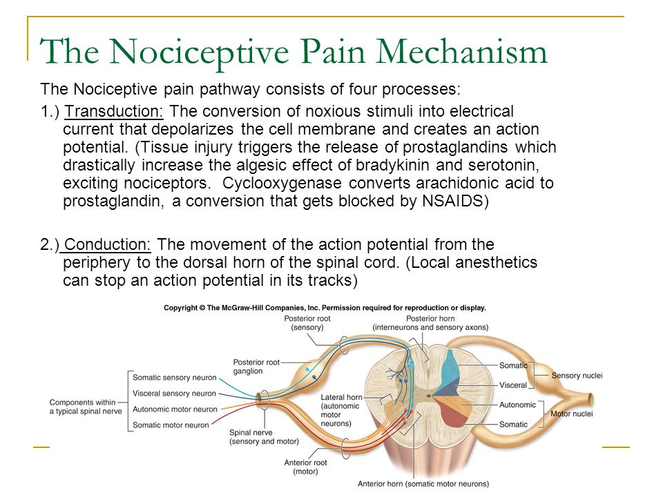 The Nociceptive Pain Mechanism