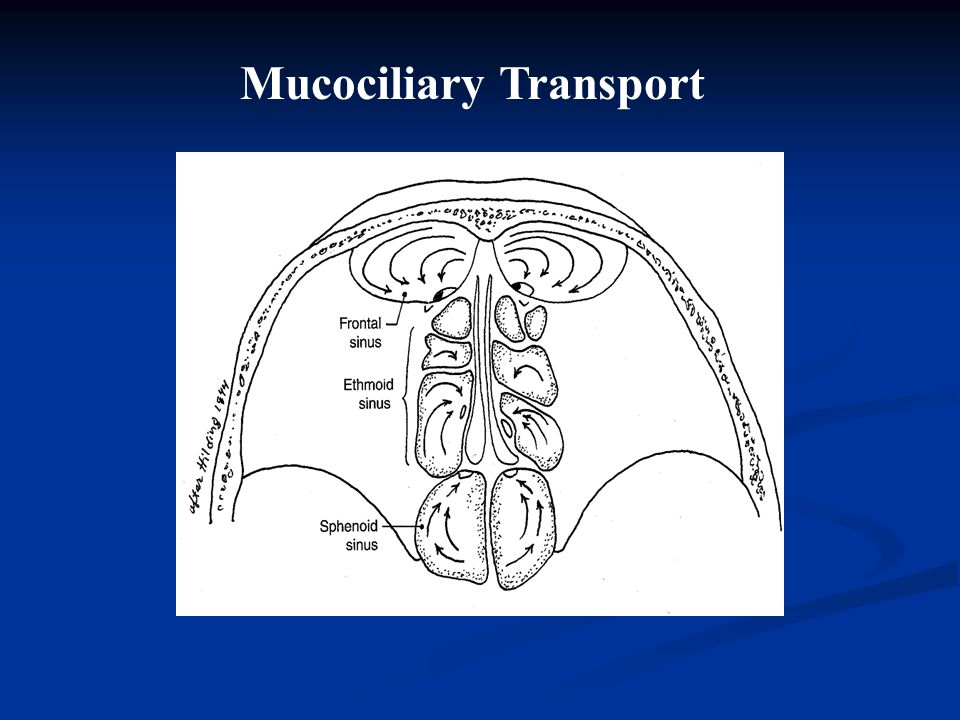 Mucociliary Transport