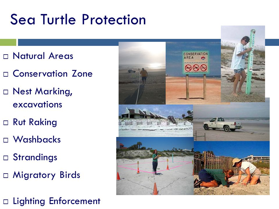 Sea Turtle Protection Natural Areas Conservation Zone