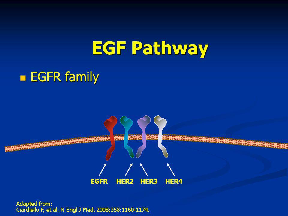 EGF Pathway EGFR family EGFR HER2 HER3 HER4 Adapted from: