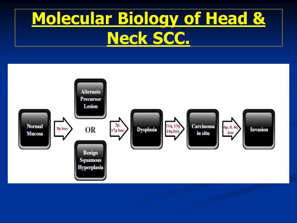 Molecular Biology of Head & Neck SCC.